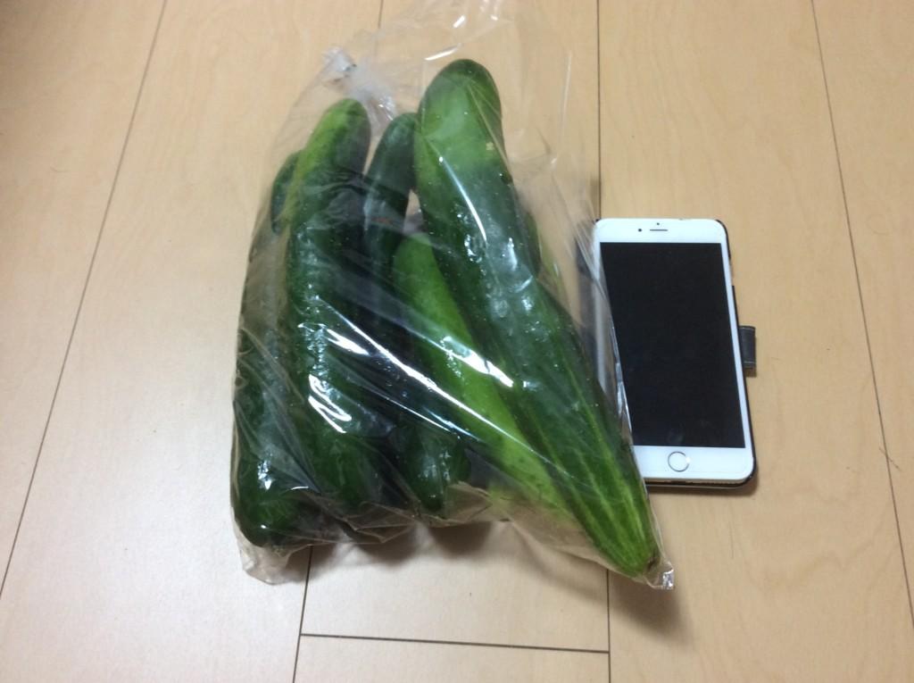 きゅうりとiPhone