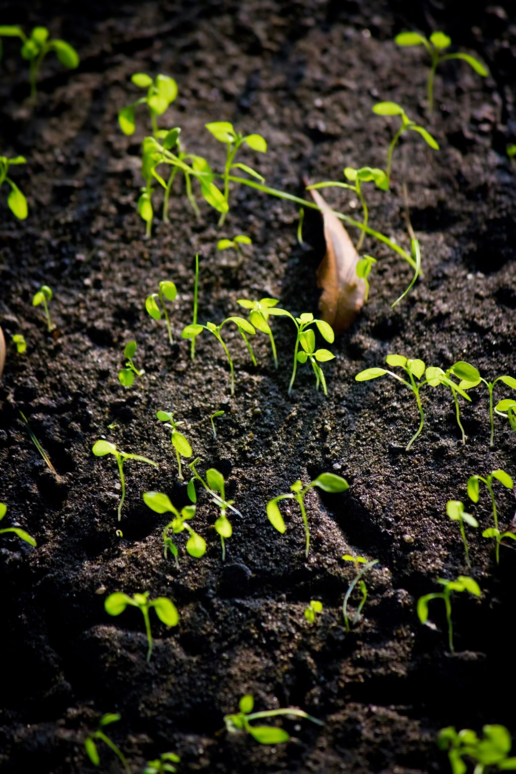 土から芽がでる