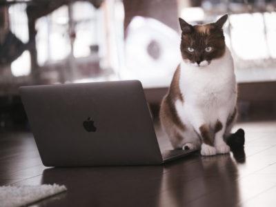 Mac 猫