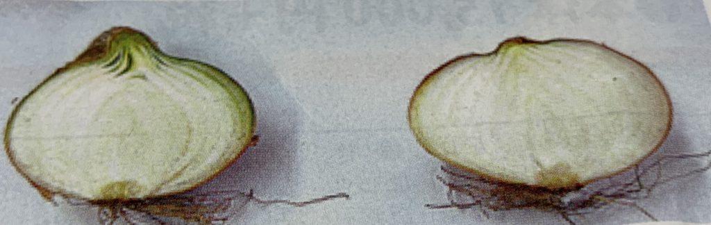 玉ねぎ比較