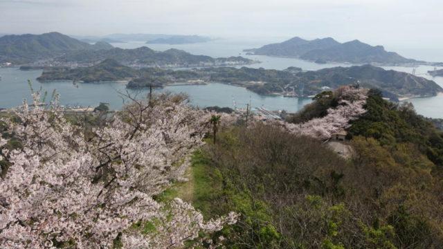 積善山三千本桜