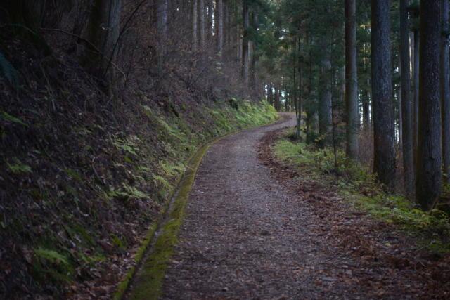 星が森への道のり
